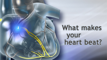 Cardiac Conduction System - Animation