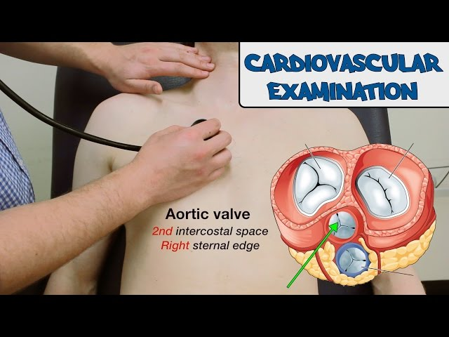 Cardiovascular Examination - (New Version)