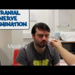 Cranial Nerve - Physical Exam