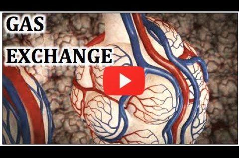 Gas Exchange - Animation