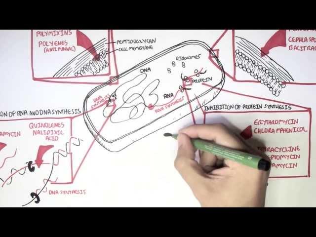 Microbiology - Antibiotics Mechanisms of Action
