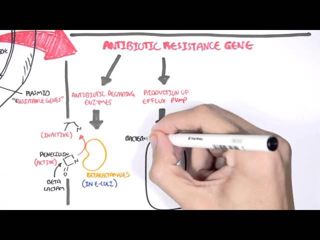 Microbiology - Bacteria Antibiotic Resistance