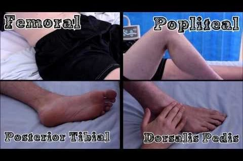 Pulses of the Lower Limb