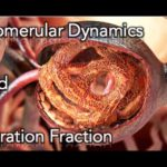 ✔ Renal Physiology - Glomerular dynamics & Filtration Fraction - MADE EASY