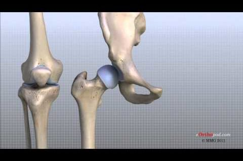 Knee Anatomy Animated Tutorial