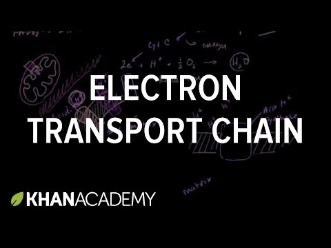 khan academy preschool electron transport chain free 906