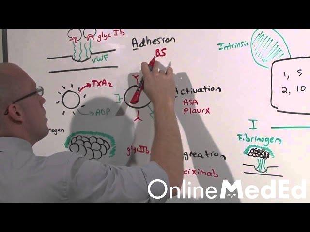 Intern Content: Bleeding - OnlineMedEd