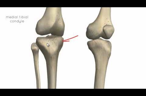 Knee Joint - Part 1 - 3D Anatomy Tutorial
