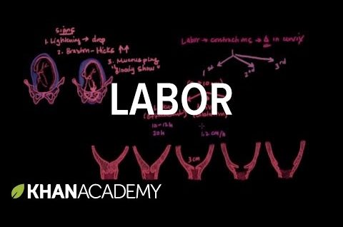 Stages of Labor - Obstetrics Physiology