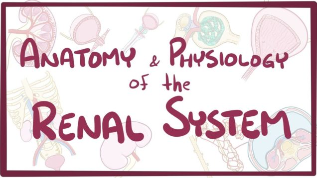 Renal Physiology Video Lecture Archive - Free Medical Videos