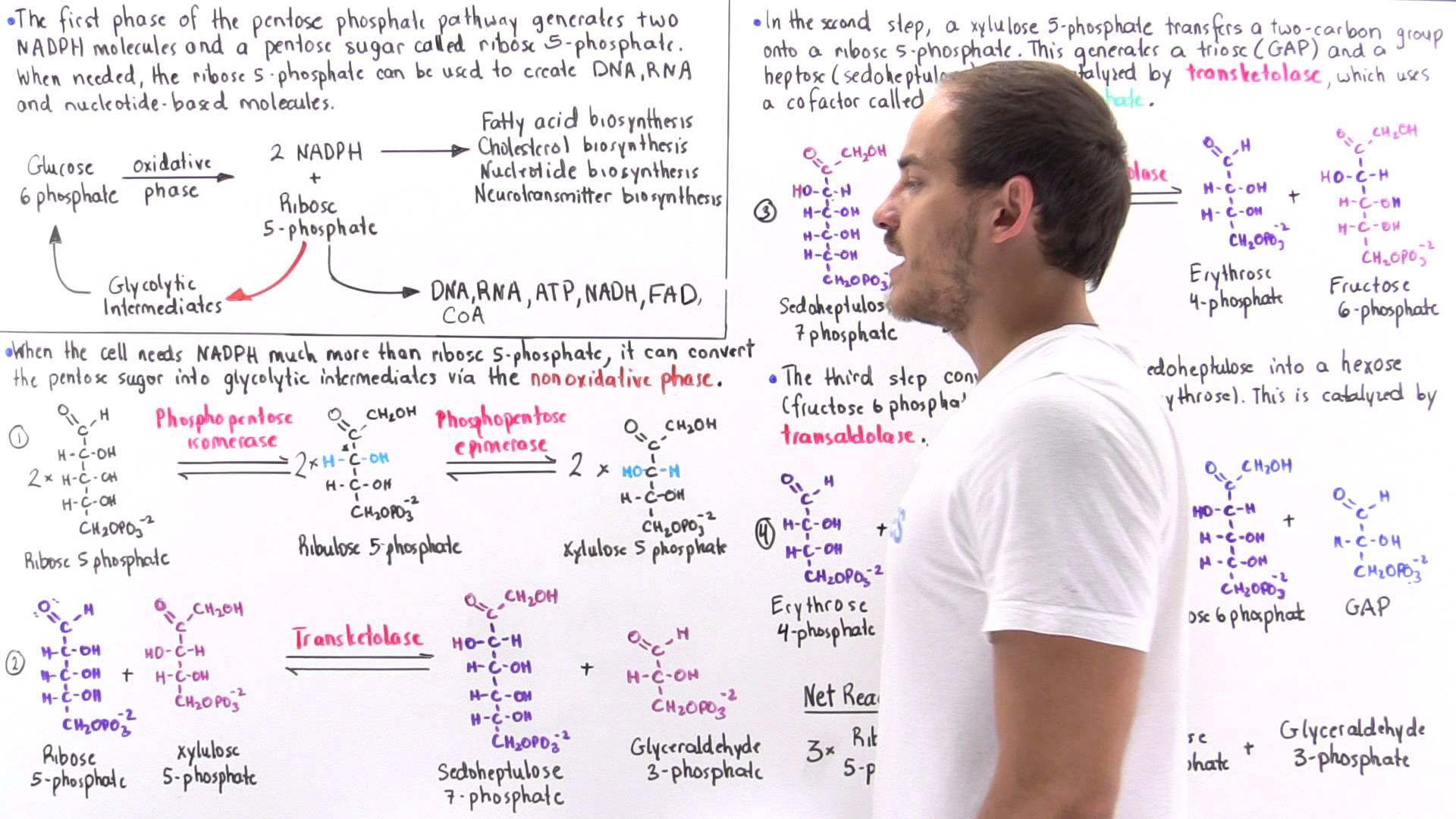 Nonoxidative Phase of Pentose Phosphate Pathway