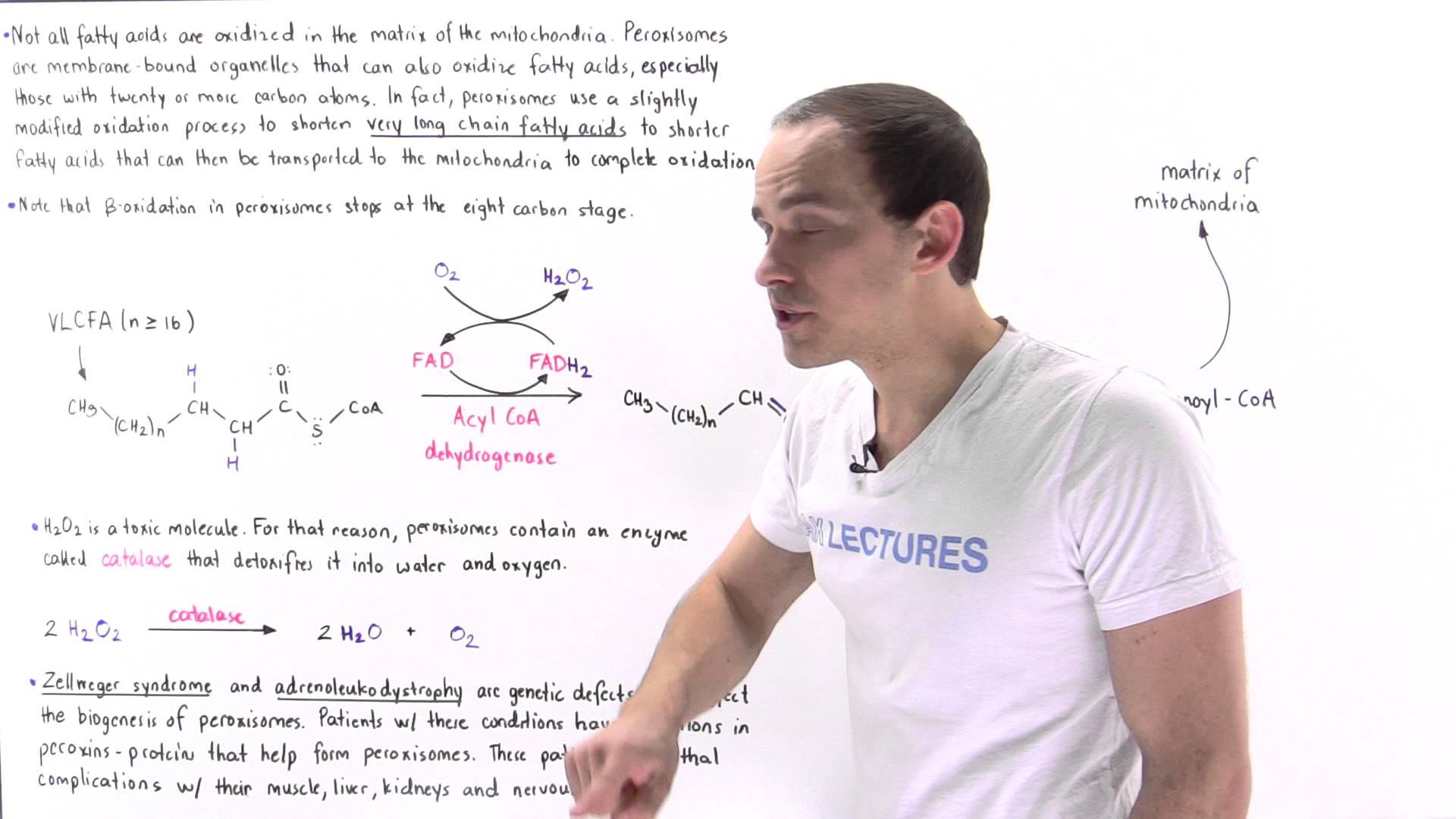 Peroxisomal Oxidation of Fatty Acids