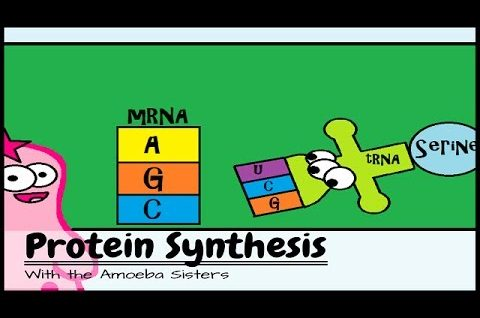 Protein Synthesis (Updated)