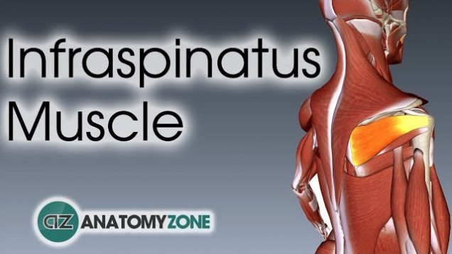 FREE Anatomy Video Lectures Archive - Free Medical Videos