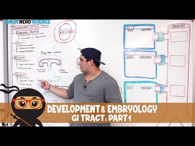 Gastrointestinal | Development & Embryology of the GI Tract | Part 1
