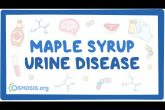 Maple Syrup Urine Disease - causes, symptoms, diagnosis, treatment, pathology
