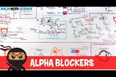 Hypertension Treatment | Alpha Blockers: Antihypertensives