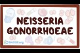Neisseria gonorrhoeae - causes, symptoms, diagnosis, treatment, pathology